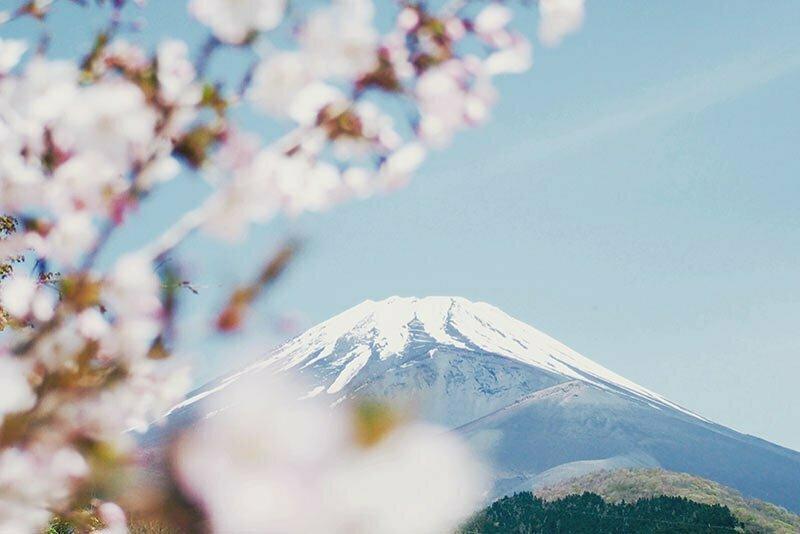 mont fuji enneigé et fleurs de cerisier japonais sakura