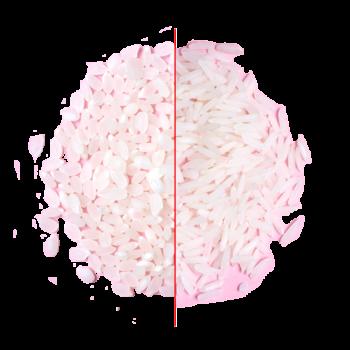 riz japonica akafuji et riz indica