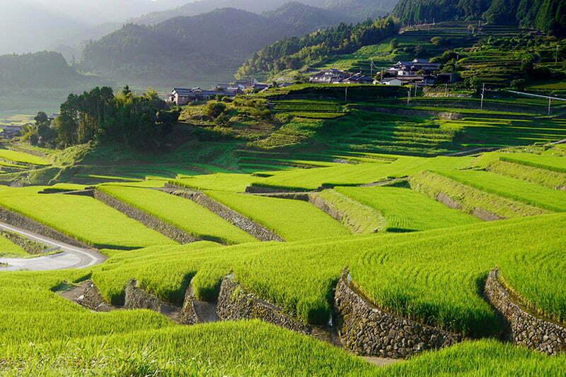 riziere en terasse au japon